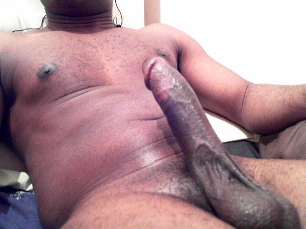 Black BULL looking